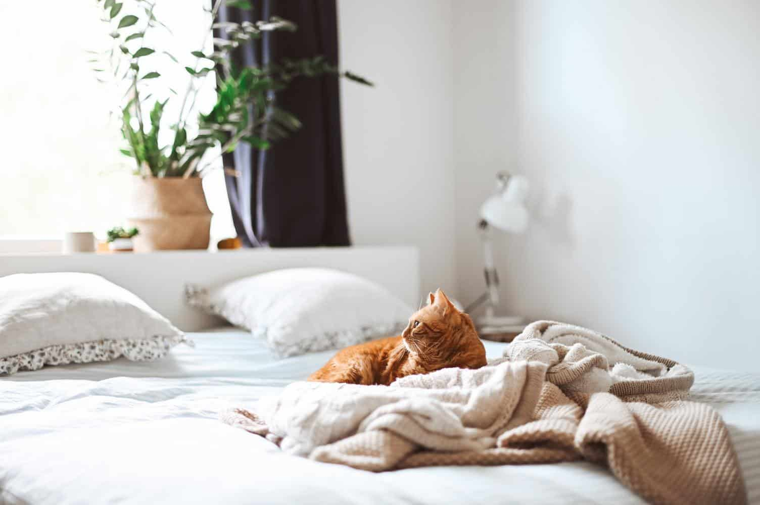 bed with cat and plant
